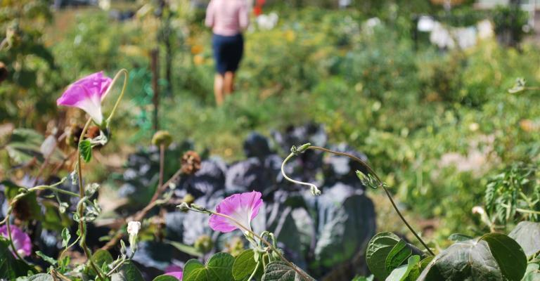 http://www.stapletondenver.com/wp-content/uploads/2014/12/Garden_2_0.jpg