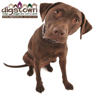 Digstown a doggie day care in Stapleton