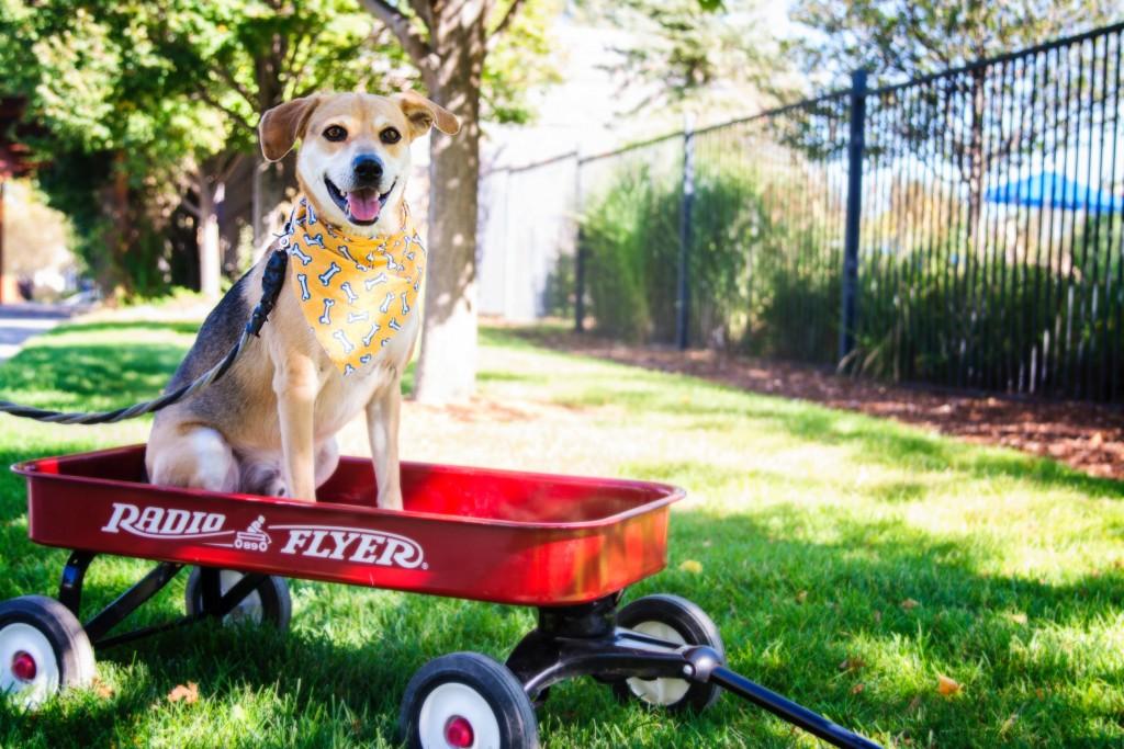 Blaze Dogs of Stapleton Calendar Winner