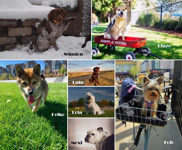 Dogs of Stapleton Calendar Winners