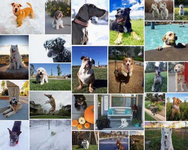 Dogs of Stapleton