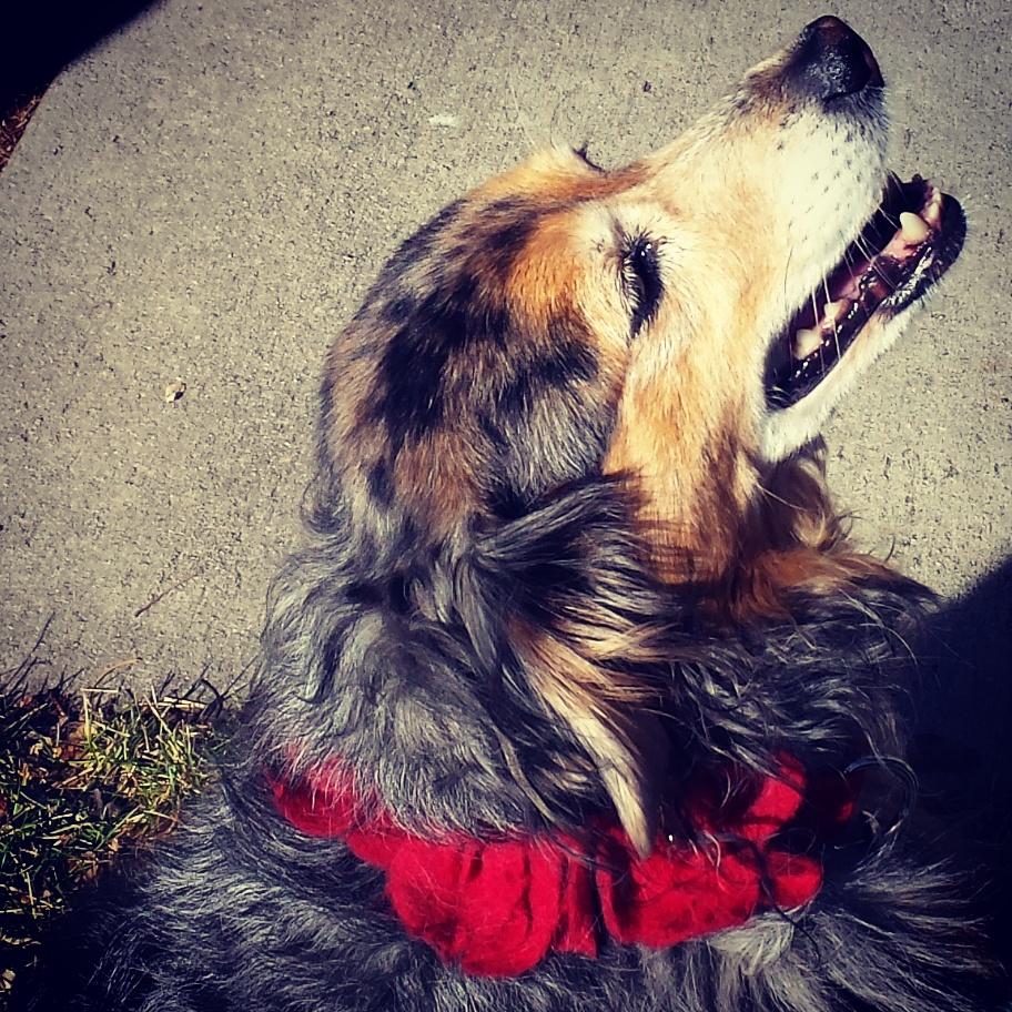 Cambre Dogs of Stapleton calendar winner