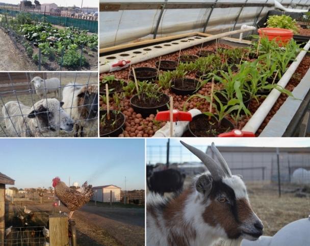 Time to Celebrate Urban Farm