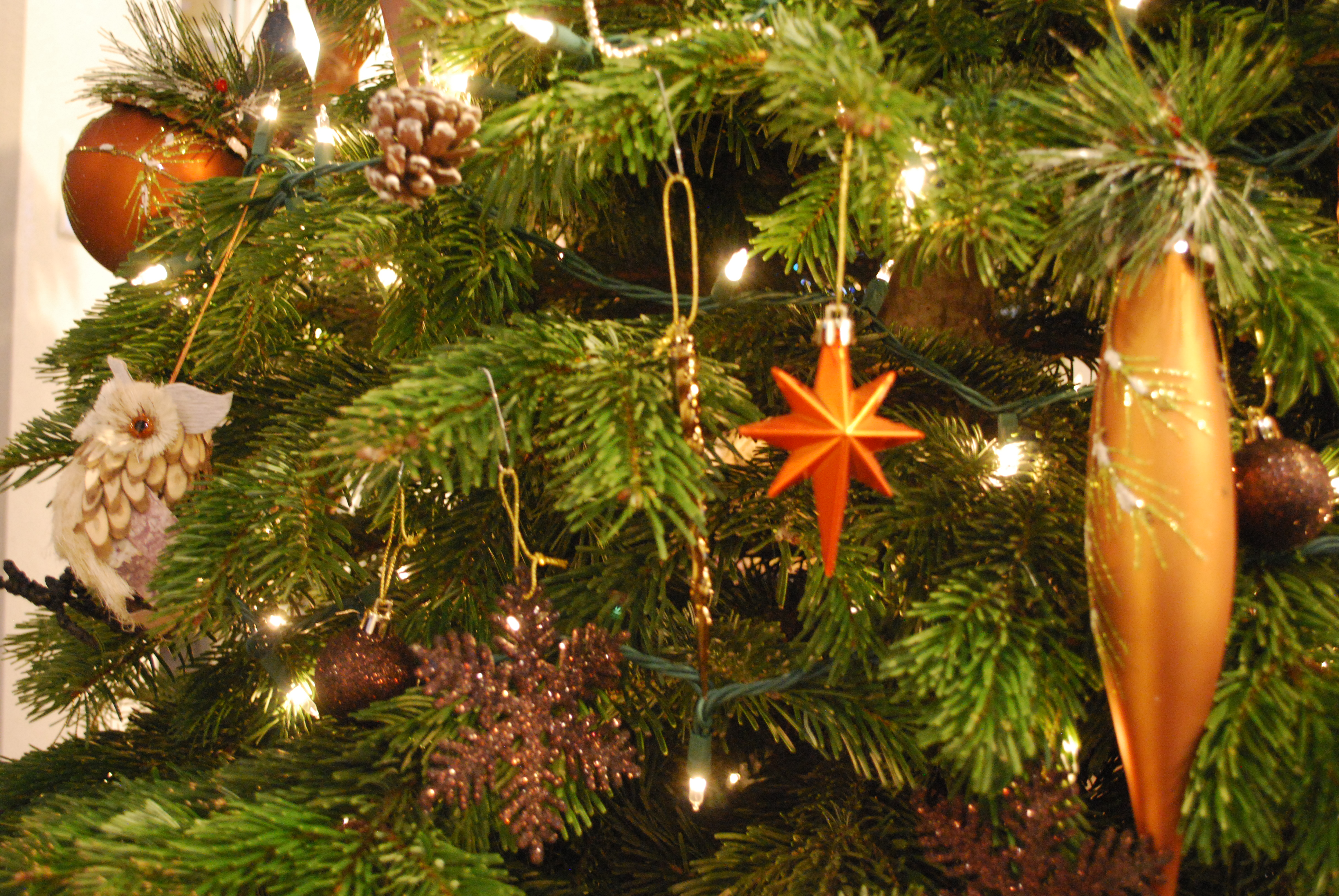 http://www.stapletondenver.com/wp-content/uploads/Christmas_Tree_Visitor_Center_1_1.JPG