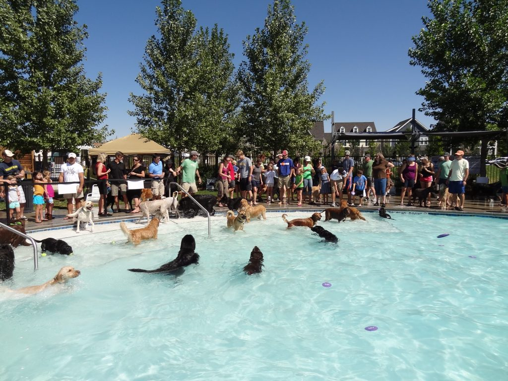 Dog Daze at F15 Pool in Denver, CO