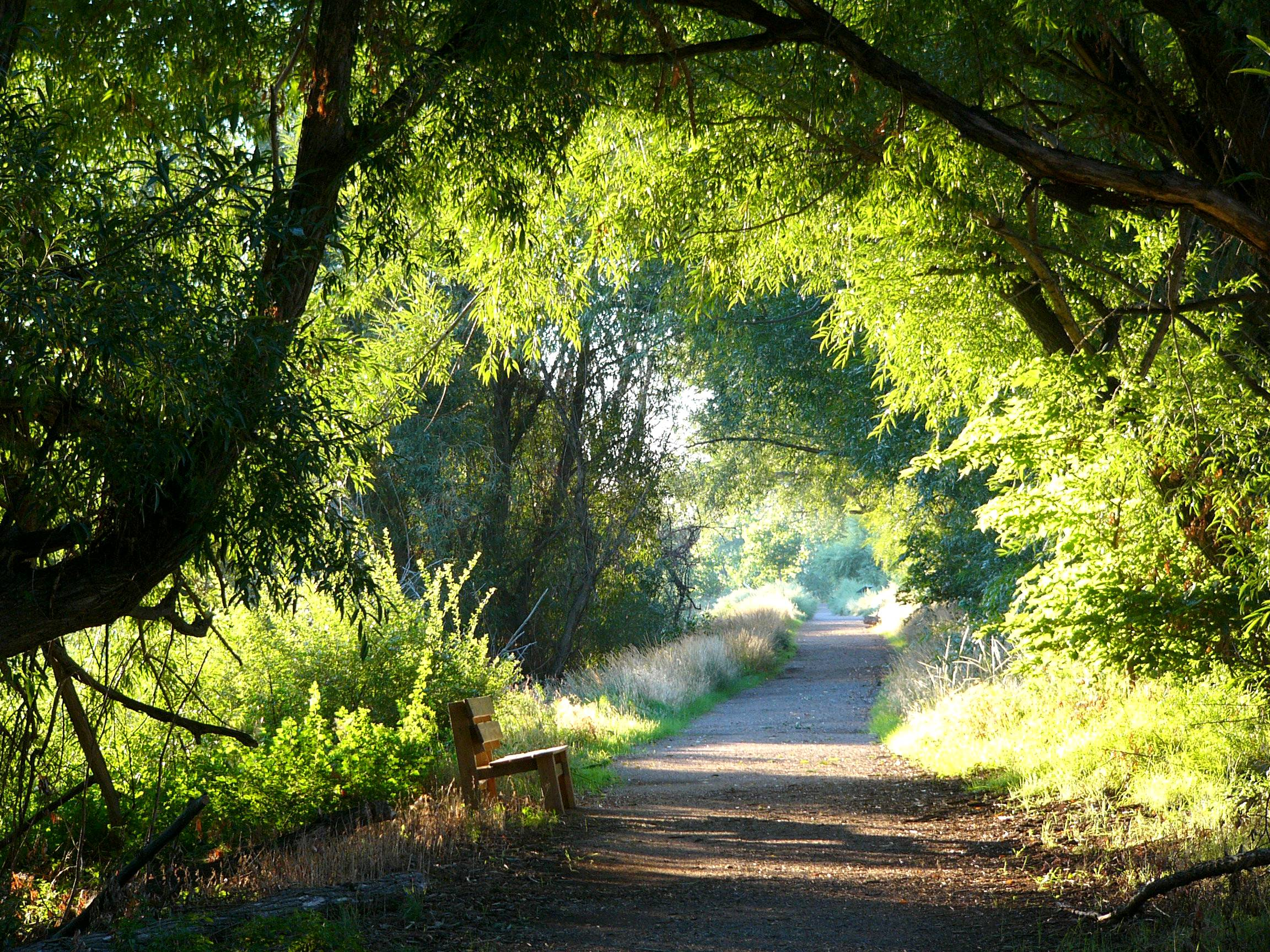 Levy Trail