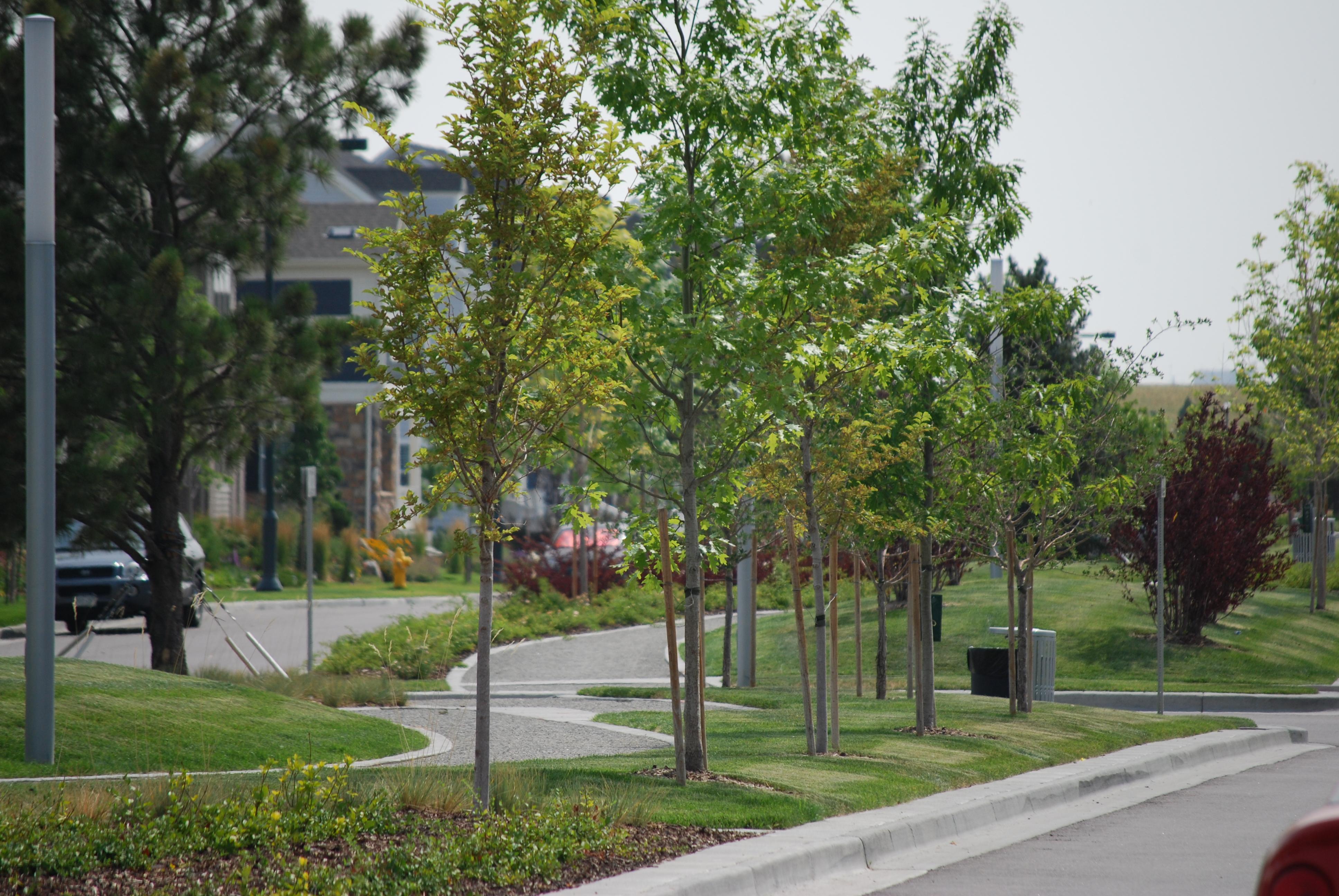 Stapleton Parks 4
