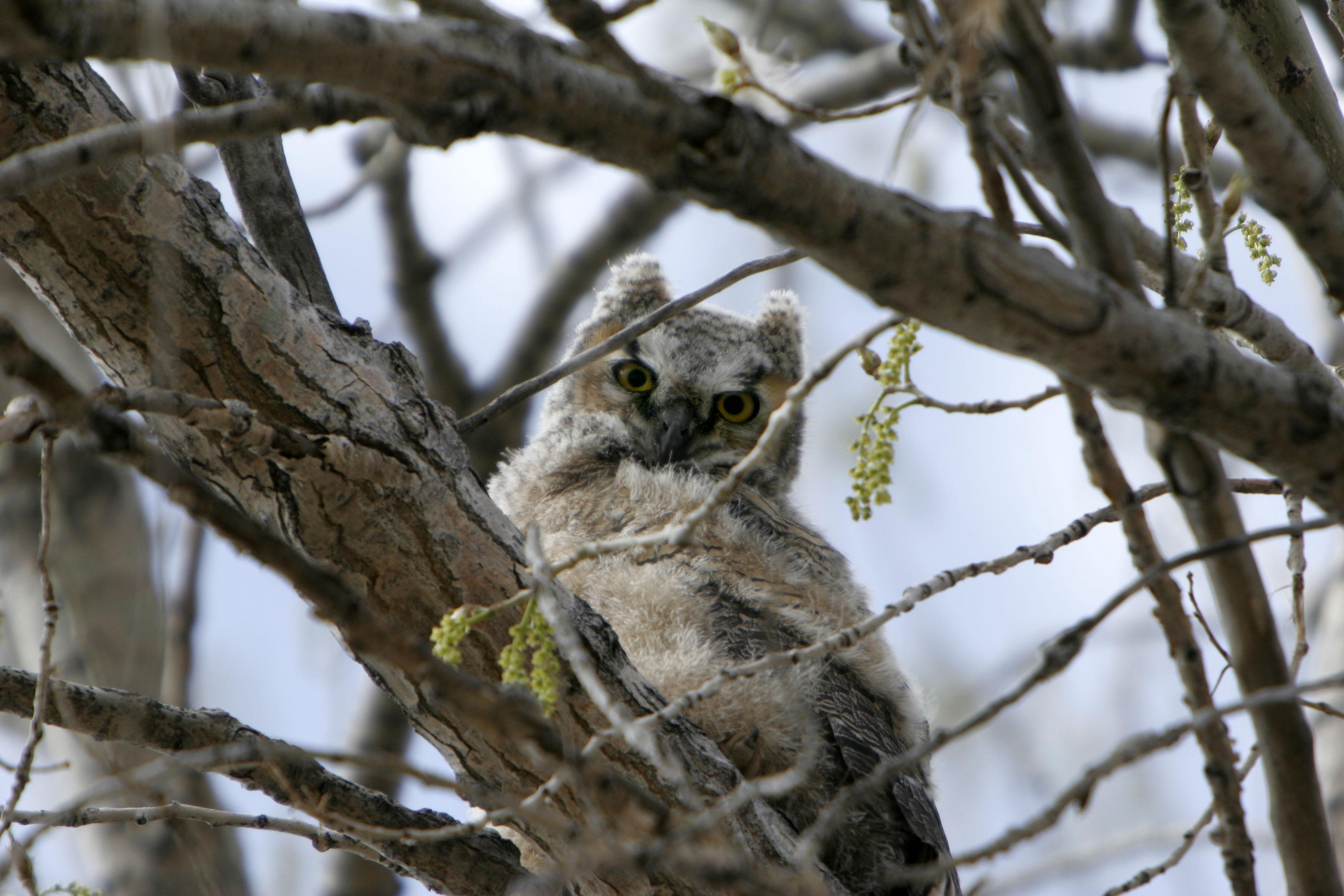 owl Bluff Lake
